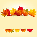 Color background with autumn leaves. Light rectangle for text on a background of autumn leaves. Vector illustration for business presentation. Cartoon style Royalty Free Stock Photo