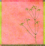 Color background with fennel. Color background with blossom fennel Royalty Free Stock Photos