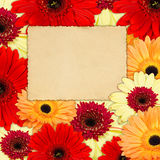 Color background from gerber flowers with old photo Royalty Free Stock Photos
