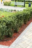 Bark in decorating flowerbeds with decorative landscape bushes. Color bark in decorating flowerbeds with decorative landscape bushes royalty free stock photo
