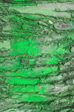 Color of  Bark  tree Stock Photos