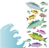 COLOR BEAUTIFUL SMALL FISHES ON THE WHITE BACKGROUND Stock Photography