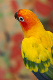 Color bird Royalty Free Stock Photography