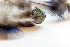 Color bird feathers lying on the white paper Stock Photos