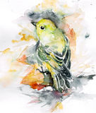 Color bird Royalty Free Stock Image