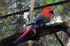 Color bird parrot royalty free stock photos