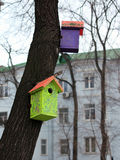 Color birdhouse on a tree in the city Stock Photos