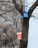 Color birdhouse on a tree in the city Royalty Free Stock Photo