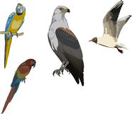 Color birds collection Royalty Free Stock Photo