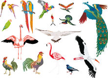 Color birds collection on white background Stock Images