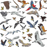 Color birds set seamless pattern Stock Images