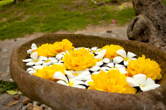 Color blanco de la flor de Tailandia en el sol Fotografía de archivo