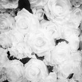 Color blanco y negro de Rose para el fondo imagenes de archivo