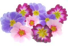color blommor Arkivfoto