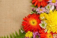 color blommor fulla Arkivfoto