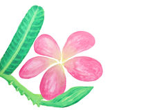 Color blommor i vattenfärghand målade Fotografering för Bildbyråer