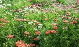 color blommor mång- Royaltyfria Foton