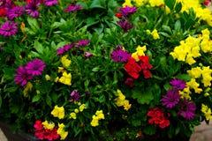 color blommor mång- Fotografering för Bildbyråer