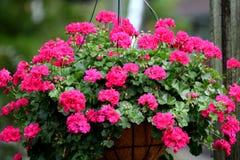 color blommor mång- Arkivfoton