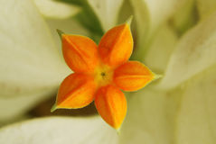 color blommor orange Arkivfoto