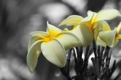color blommor selektiva Royaltyfri Foto
