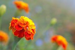 color blommor vibrerande Royaltyfria Foton