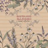 Color botanic garden herbal tea label Stock Image