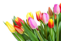 Color bouquet of tulips stock photo