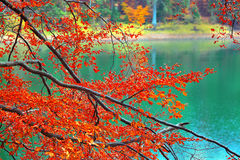 Color branches of trees in autumn Royalty Free Stock Photography