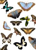 Color butterflies background Royalty Free Stock Photography