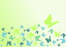 Color butterfly Royalty Free Stock Image
