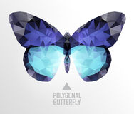 Color butterfly flying Royalty Free Stock Photography