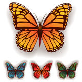 Color butterfly isolated on a white Royalty Free Stock Photography