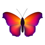 Color butterfly, isolated on white background. Vector illustration. Royalty Free Stock Photography