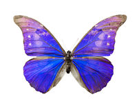 Color butterfly  on white background Stock Photography