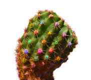 Color cactus Stock Photography