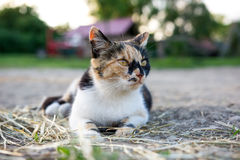 Color cat looking at the street. Royalty Free Stock Photography
