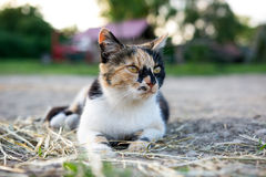 Color cat looking at the street. Royalty Free Stock Photo