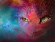 Color cat. Mixed media photography and digital manipulation Royalty Free Stock Image