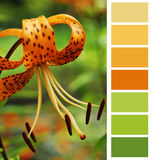 Color chart selection Royalty Free Stock Images