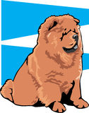 Color Chow chow dog. Colored illustration of a chow chow dog Stock Images