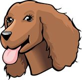 Color Cocker spaniel cartoon Royalty Free Stock Images