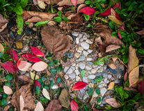 Color Collage Of Leaves And Stone. Collage of leaves and stones outside Royalty Free Stock Photo