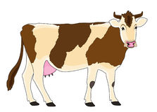 Color cow Stock Image