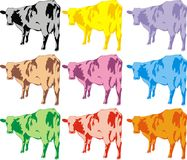 Color cows Stock Photography