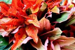 Color de fondo y de la hoja de la naturaleza Fotos de archivo libres de regalías