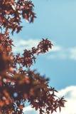 Color de hojas en otoño Imagen de archivo