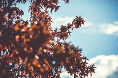 Color de hojas en otoño Fotografía de archivo