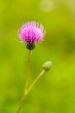 Color de la abeja Fotos de archivo libres de regalías