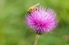 Color de la abeja Foto de archivo libre de regalías